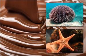 chocolate marino