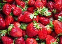 Fresas contrarrestan daños gástricos