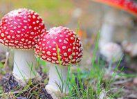 Hongos alucinógenos ayudan en tratamiento de cáncer avanzado