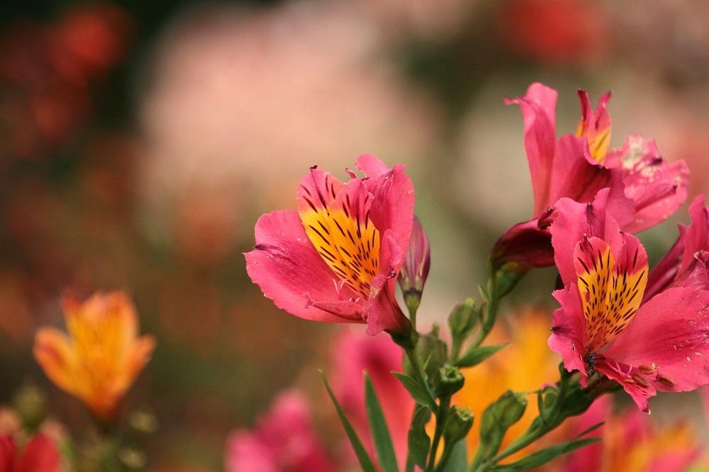 Las Flores de Galipán: