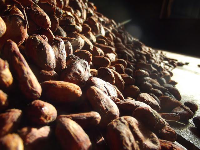 Cacao venezolano